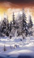 Download free mobile wallpaper 47816: Trees,Fir-trees,Landscape,Nature,Snow,Winter for phone or tab. Download images, backgrounds and wallpapers for mobile phone for free.