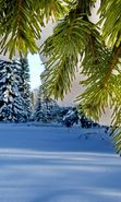 Download free mobile wallpaper 22911: Trees, Fir-trees, Landscape, Plants, Snow, Winter for phone or tab. Download images, backgrounds and wallpapers for mobile phone for free.