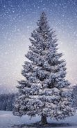 Download free mobile wallpaper 22657: Trees, Fir-trees, Landscape, Snow, Winter for phone or tab. Download images, backgrounds and wallpapers for mobile phone for free.