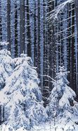 Download free mobile wallpaper 2454: Landscape, Winter, Trees, Snow, Fir-trees for phone or tab. Download images, backgrounds and wallpapers for mobile phone for free.
