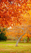 Download free mobile wallpaper 24461: Trees, Leaves, Autumn, Landscape for phone or tab. Download images, backgrounds and wallpapers for mobile phone for free.