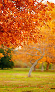Download free mobile wallpaper 26126: Trees, Leaves, Autumn, Landscape for phone or tab. Download images, backgrounds and wallpapers for mobile phone for free.