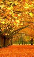 Download free mobile wallpaper 29854: Trees,Leaves,Autumn,Landscape for phone or tab. Download images, backgrounds and wallpapers for mobile phone for free.