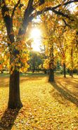 Download free mobile wallpaper 28270: Trees, Leaves, Autumn, Landscape, Sun for phone or tab. Download images, backgrounds and wallpapers for mobile phone for free.