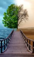 Download free mobile wallpaper 20876: Trees, Sea, Landscape, Desert for phone or tab. Download images, backgrounds and wallpapers for mobile phone for free.
