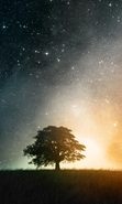 Download free mobile wallpaper 44422: Trees,Sky,Landscape,Nature,Stars for phone or tab. Download images, backgrounds and wallpapers for mobile phone for free.