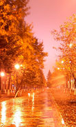 Download free mobile wallpaper 22329: Trees, Night, Autumn, Landscape, Streets for phone or tab. Download images, backgrounds and wallpapers for mobile phone for free.