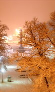 Download free mobile wallpaper 22037: Trees, Night, Landscape, Snow, Winter for phone or tab. Download images, backgrounds and wallpapers for mobile phone for free.