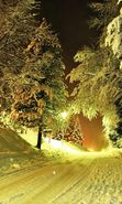 Download free mobile wallpaper 27328: Trees, Night, Landscape, Snow, Winter for phone or tab. Download images, backgrounds and wallpapers for mobile phone for free.