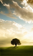 Download free mobile wallpaper 37792: Trees,Clouds,Landscape for phone or tab. Download images, backgrounds and wallpapers for mobile phone for free.