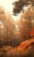 Download free mobile wallpaper 30062: Trees,Autumn,Landscape for phone or tab. Download images, backgrounds and wallpapers for mobile phone for free.