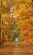 Download free mobile wallpaper 38902: Trees,Autumn,Landscape for phone or tab. Download images, backgrounds and wallpapers for mobile phone for free.