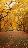 Download free mobile wallpaper 43533: Trees,Autumn,Landscape for phone or tab. Download images, backgrounds and wallpapers for mobile phone for free.