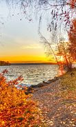 Download free mobile wallpaper 20710: Trees, Autumn, Landscape, Rivers, Sunset for phone or tab. Download images, backgrounds and wallpapers for mobile phone for free.