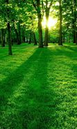Download free mobile wallpaper 3247: Landscape, Trees, Grass, Sun for phone or tab. Download images, backgrounds and wallpapers for mobile phone for free.