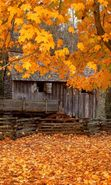 Download free mobile wallpaper 2775: Landscape, Houses, Autumn, Leaves for phone or tab. Download images, backgrounds and wallpapers for mobile phone for free.