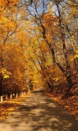 Download free mobile wallpaper 38095: Roads,Autumn,Landscape for phone or tab. Download images, backgrounds and wallpapers for mobile phone for free.