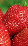 Download free mobile wallpaper 6432: Food, Strawberry, Berries for phone or tab. Download images, backgrounds and wallpapers for mobile phone for free.