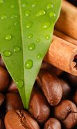 Download free mobile wallpaper 11276: Food, Leaves, Drops, Coffee, Cinnamon for phone or tab. Download images, backgrounds and wallpapers for mobile phone for free.