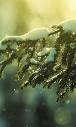 Download free mobile wallpaper 30956: Fir-trees,Background,Snow for phone or tab. Download images, backgrounds and wallpapers for mobile phone for free.