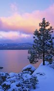 Download free mobile wallpaper 8947: Landscape, Winter, Sky, Fir-trees, Lakes for phone or tab. Download images, backgrounds and wallpapers for mobile phone for free.