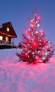 Download free mobile wallpaper 9085: Holidays, Landscape, Winter, New Year, Fir-trees, Christmas, Xmas for phone or tab. Download images, backgrounds and wallpapers for mobile phone for free.