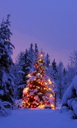 Download free mobile wallpaper 32421: Fir-trees,New Year,Landscape,Winter for phone or tab. Download images, backgrounds and wallpapers for mobile phone for free.