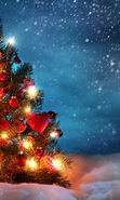 Download free mobile wallpaper 22677: Fir-trees, New Year, Holidays, Christmas, Xmas, Snow for phone or tab. Download images, backgrounds and wallpapers for mobile phone for free.
