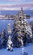 Download free mobile wallpaper 8511: Landscape, Winter, Rivers, Fir-trees for phone or tab. Download images, backgrounds and wallpapers for mobile phone for free.