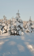Download free mobile wallpaper 34918: Fir-trees,Landscape,Snow,Winter for phone or tab. Download images, backgrounds and wallpapers for mobile phone for free.