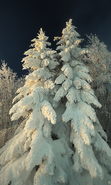 Download free mobile wallpaper 40264: Fir-trees,Landscape,Winter for phone or tab. Download images, backgrounds and wallpapers for mobile phone for free.