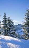 Download free mobile wallpaper 7776: Landscape, Winter, Fir-trees for phone or tab. Download images, backgrounds and wallpapers for mobile phone for free.