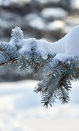 Download free mobile wallpaper 40706: Fir-trees,Plants,Snow for phone or tab. Download images, backgrounds and wallpapers for mobile phone for free.