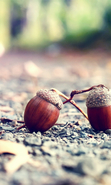 Download free mobile wallpaper 44415: Acorns,Objects for phone or tab. Download images, backgrounds and wallpapers for mobile phone for free.