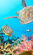 Download free mobile wallpaper 49300: Turtles,Sea,Landscape,Fishes for phone or tab. Download images, backgrounds and wallpapers for mobile phone for free.