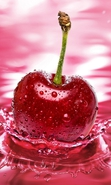 Download free mobile wallpaper 33586: Sweet cherry,Background,Fruits for phone or tab. Download images, backgrounds and wallpapers for mobile phone for free.