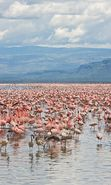 Download free mobile wallpaper 4928: Animals, Landscape, Water, Flamingo for phone or tab. Download images, backgrounds and wallpapers for mobile phone for free.