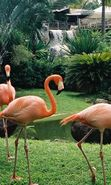 Download free mobile wallpaper 1490: Animals, Birds, Flamingo for phone or tab. Download images, backgrounds and wallpapers for mobile phone for free.