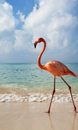 Download free mobile wallpaper 37852: Flamingo,Birds,Animals for phone or tab. Download images, backgrounds and wallpapers for mobile phone for free.