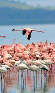 Download free mobile wallpaper 5520: Animals, Birds, Flamingo for phone or tab. Download images, backgrounds and wallpapers for mobile phone for free.