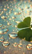 Download free mobile wallpaper 19500: Background, Drops, Leaves, Plants, Water for phone or tab. Download images, backgrounds and wallpapers for mobile phone for free.