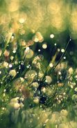 Download free mobile wallpaper 16584: Background, Drops, Plants, Grass for phone or tab. Download images, backgrounds and wallpapers for mobile phone for free.