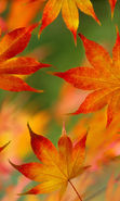 Download free mobile wallpaper 19379: Background, Leaves, Autumn for phone or tab. Download images, backgrounds and wallpapers for mobile phone for free.