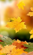 Download free mobile wallpaper 33877: Background,Leaves,Autumn for phone or tab. Download images, backgrounds and wallpapers for mobile phone for free.