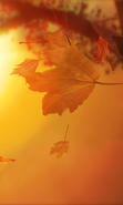 Download free mobile wallpaper 38036: Background,Leaves,Autumn for phone or tab. Download images, backgrounds and wallpapers for mobile phone for free.