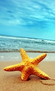 Download free mobile wallpaper 29315: Background,Sea,Starfish,Beach for phone or tab. Download images, backgrounds and wallpapers for mobile phone for free.