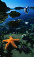 Download free mobile wallpaper 14252: Background, Sea, Starfish, Water, Animals for phone or tab. Download images, backgrounds and wallpapers for mobile phone for free.