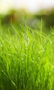 Download free mobile wallpaper 11826: Plants, Grass, Backgrounds for phone or tab. Download images, backgrounds and wallpapers for mobile phone for free.