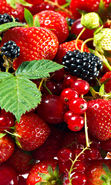 Download free mobile wallpaper 16742: Fruits, Strawberry, Plants, Currant, Blackberry for phone or tab. Download images, backgrounds and wallpapers for mobile phone for free.