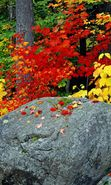 Download free mobile wallpaper 1806: Plants, Landscape, Stones, Autumn, Leaves for phone or tab. Download images, backgrounds and wallpapers for mobile phone for free.